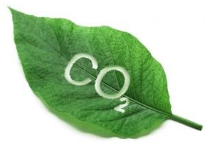 Углекислый газ необходим для питания растений