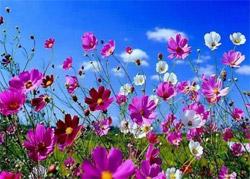 Цветы на дачном участке