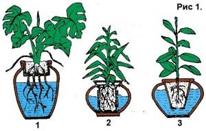 Принцип гидропонного выраивания растений